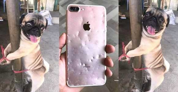 Nigerian lady punishes her dog for chewing her iPhone (Photos)