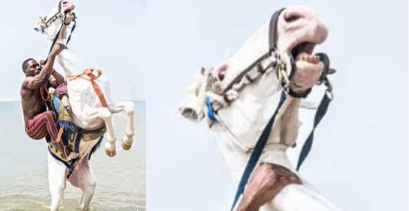 Animal Cruelty: Nigerians call out Tobi Bakre after he held a horse's neck too tight during photoshoot