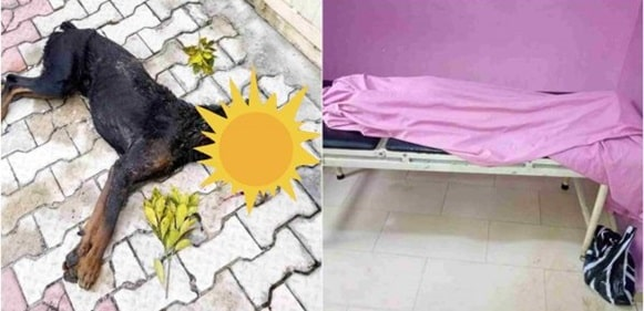 Dog shot dead after biting pupil to death in Port-Harcourt