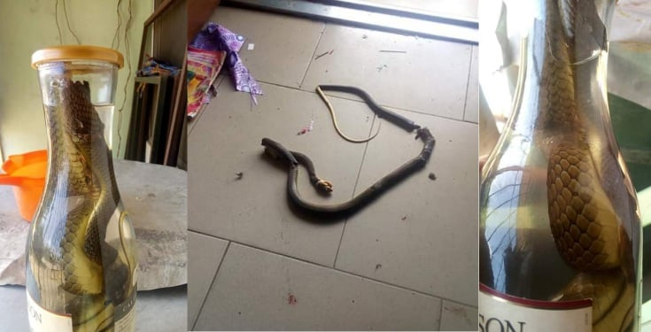 Man kills a poisonous snake that crawled into his house (Photos)