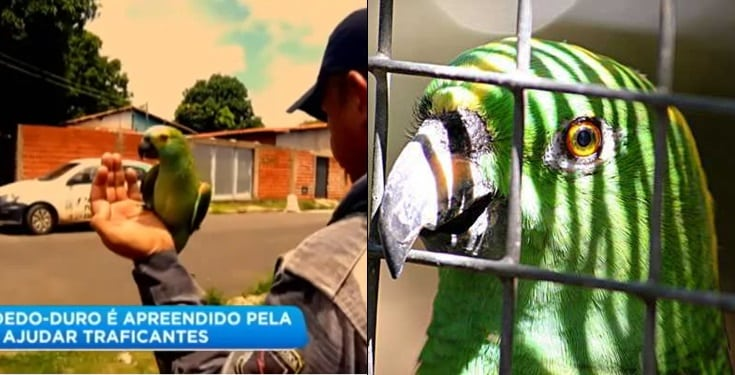 "Parrot is taken into custody for screaming ""Mama, Police!"" to tip off drug dealers"