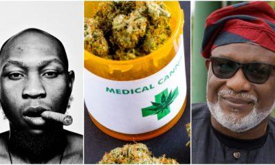 Governor Akeredolu, Seun Kuti, Cannabis