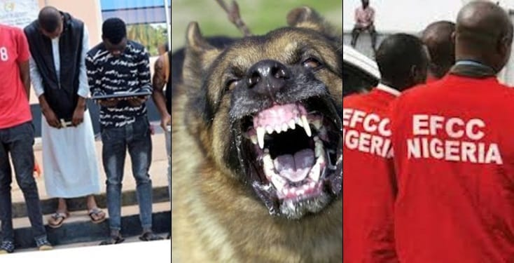 Yahoo boys unleash dogs on EFCC operatives