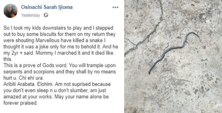2-yr-old boy kills a snake while playing in their compound