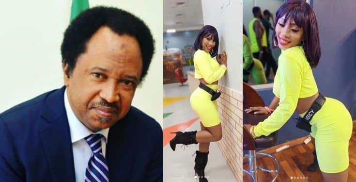 BBNaija: With Khafi & Tacha gone, Senator Shehu Sani says he's now rooting for Mercy to win