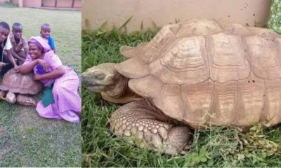 344-Year-Old Tortoise In Soun Of Ogbomoso's Palace Is Dead