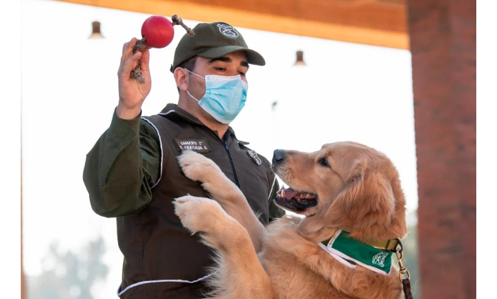 Chilean Dogs To Detect Covid-19