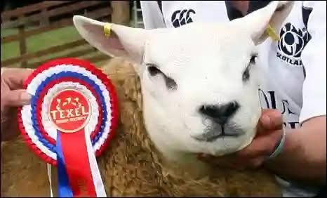 World's Most Expensive Sheep