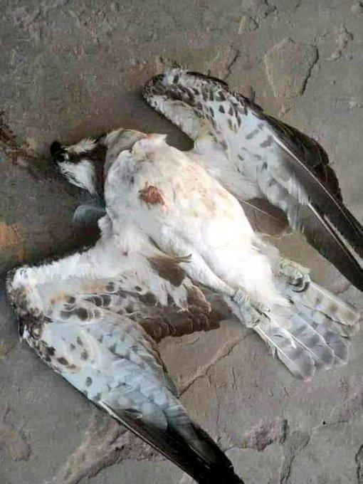 Falcon murdered  in Delta state