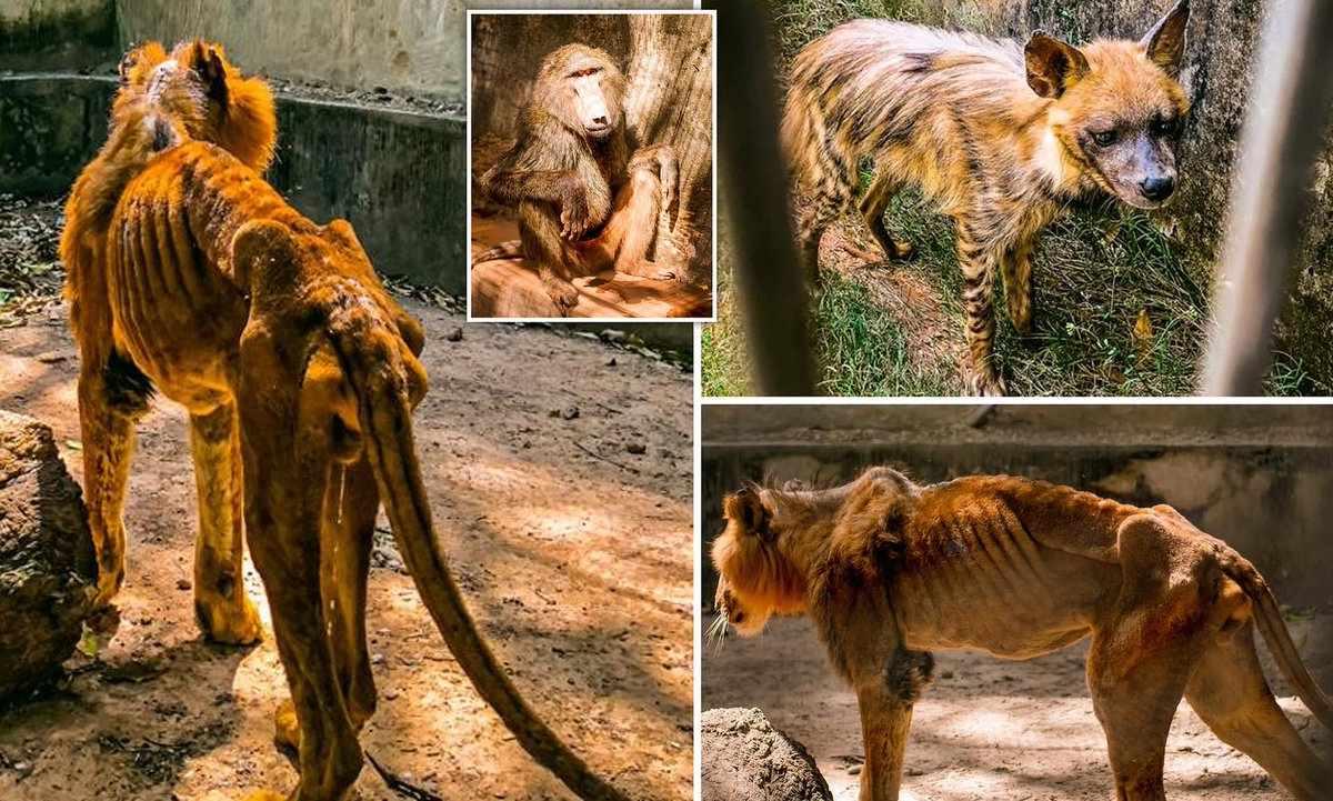 starving animals in kaduna zoo