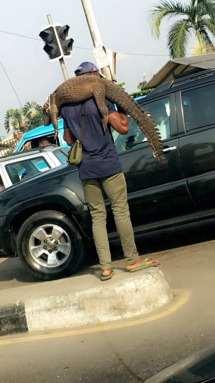 Man Hawking Crocodile in Traffic