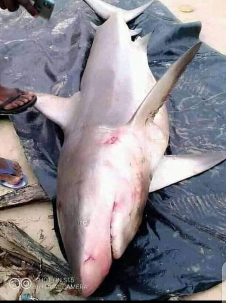 fisherman shark Rivers fish