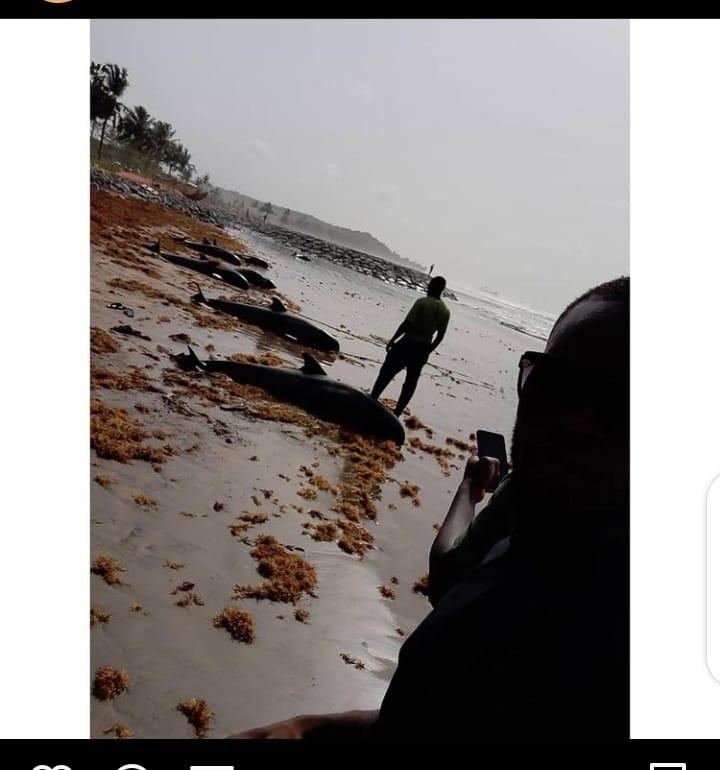 Dolphins washed ashore Ghana