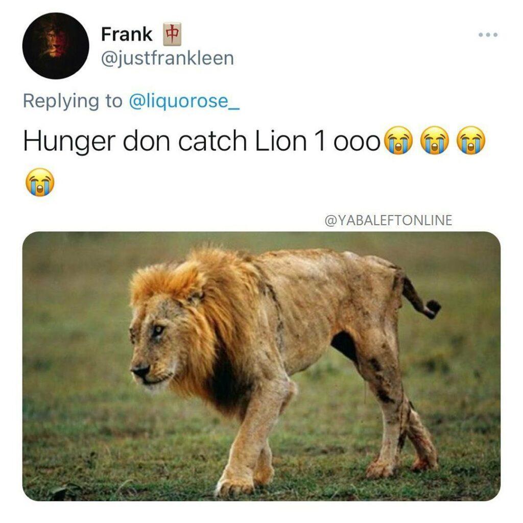 Liquorose LIONS fan base